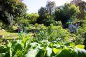 Garden_Awards-_Shared_Garden-_Waverley_Community_Garden.jpg
