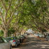 Tree Management Policy Review - Have Your Say Day  thumbnail