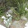 Wild About You - Native Gardening Workshop  thumbnail