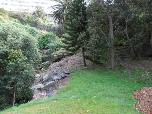 Tamarama gully bushland 2013