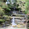 Bronte Waterfall Bushcare Group thumbnail