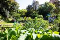 Garden_Awards-_Shared_Garden-_Waverley_Community_Garden.jpg