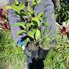 Gardening with natives workshop  thumbnail