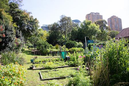 kids doing gardening