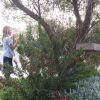Gardening for Habitat workshop thumbnail