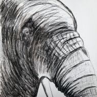 Henry_Moores_ElephantJune_Baptista.jpg